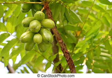 star fruit - green belimbing wuluh or star fruit