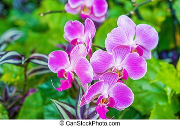 Pink Tropical Flowers. Blossom Plant. Botanic Photo.