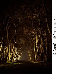 Old Trees Park Alley - Mysterious Park Alley at Night...