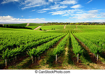 One Tree Hill Vineyard - Vineyard in One Tree Hill, South...