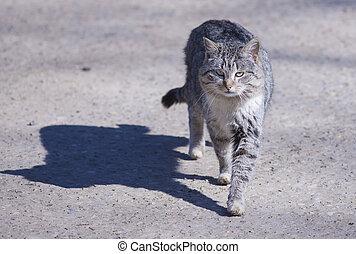 Stray   cat - Stray cats living near the monastery