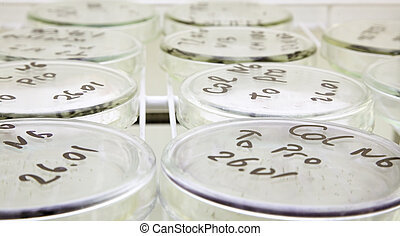 microbiology science - laboratory workplace for creating...