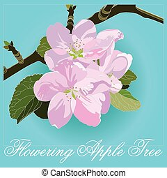 apple blossoms. Spring Apple-tree branch in bloom