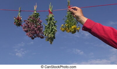 hanging fresh medical herbs flowers bunch on rope
