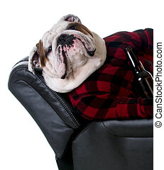 drinking dog - bulldog dressed like a man laying in a...