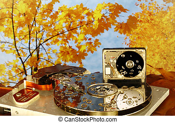 Disassembled HDD in damp autumn wood - Disassembled HDD 3,5...