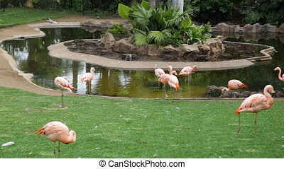 Pink flamingos - A flock of pink flamingos and reflection in...