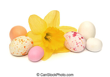 Colourful easter eggs and a daffodil on a white background