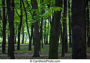 Green forest with maple trees