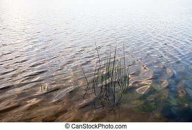 Water surface with visible water plants and reed stems -...
