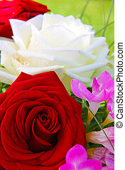 Birthday card. - Roses bouquet isolated on green...