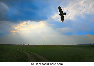 eagle flying in cloudy sky over field