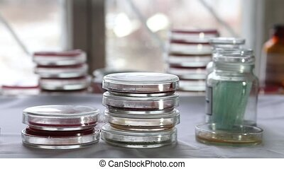 Petri dishes in medical laboratory - Technician sorting...