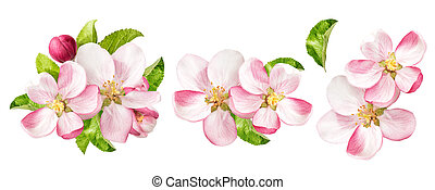 Apple tree blossoms with green leaves. Spring flowers set