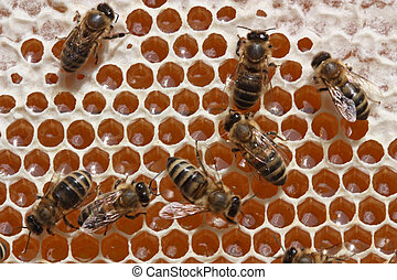 Beer technology - Passing repeatedly through itself, bees...