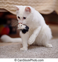 White cat with a toy.