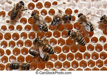 cerveza, tecnología, o, miel, fabricación