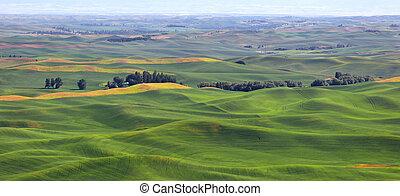Wheat fields on rolling hills - Wheat fields in Palouse from...