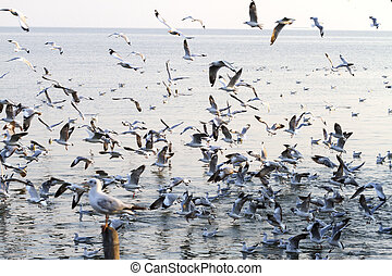 group seagull swoop sunshine - Beautiful group seagull swoop...