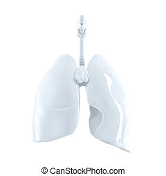 Human Lungs 3d render Isolated, contains clipping path -...