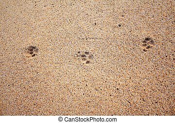 Dog footprints on the sand beach