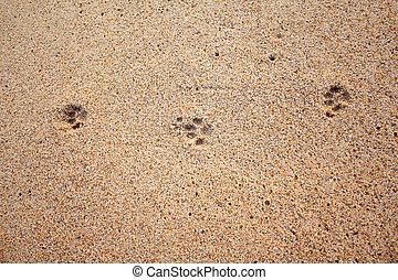 Dog footprints on the sand beach