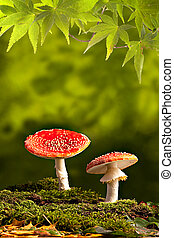 fly mushroom Amanita muscaria colors of autumn