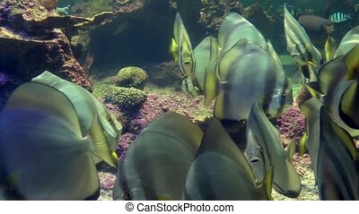 aquarium of genoa, tropical fishes - diverse marine fishes...