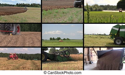 agricultural work collage - Various seasonal agricultural...