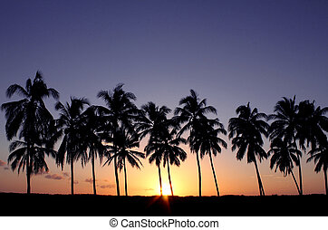 Tropical sunset with palm trees. Photographed in Playa...