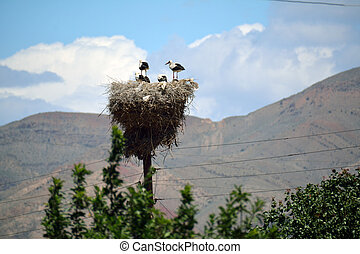 Four storks in a nest in summer