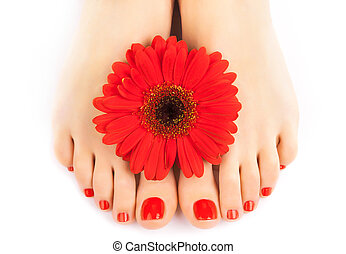 beautiful red manicured nails with gerbera - Woman feet with...