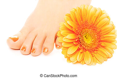 beautiful orange manicured nails with gerbera - Woman feet...