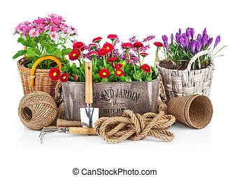 Spring flowers in wooden bucket with garden tools