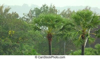 Tropical rain - Palm trees under a tropical rain, Phuket,...