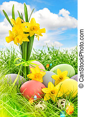 Easter eggs decoration and daffodils flowers. Blue sky with...