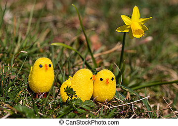 chicken talk - little artificial chick outdoors in various...
