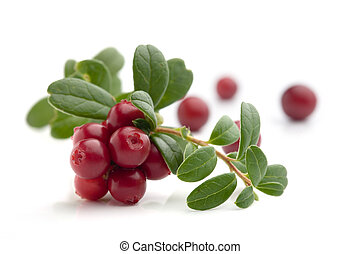 Cranberries - Bunch of fresh cranberries isolated on white