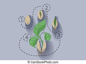 plant growth. abstract template with seed and plant