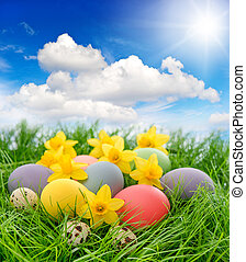 easter eggs and flowers in grass with blue sky
