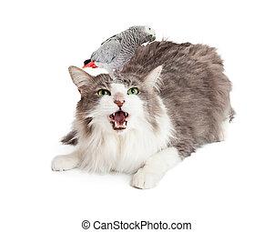 pájaro, cabeza, enojado, gato