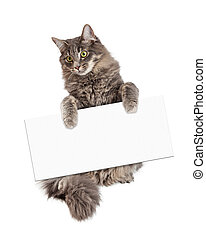 Beautiful Cat Holding Blank Sign - Beautiful adult gray...