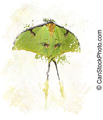 Luna Moth Watercolor - Digital Painting Of Luna Moth