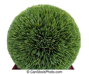 Artificial trimmed boxwood shrub against a white background