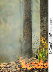 Fire burning in a forest - Fire burning in a Dry Dipterocarp...