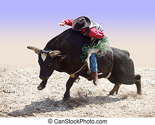 vaquero, equitación, toro