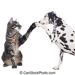 Cat and dog give high five isolated