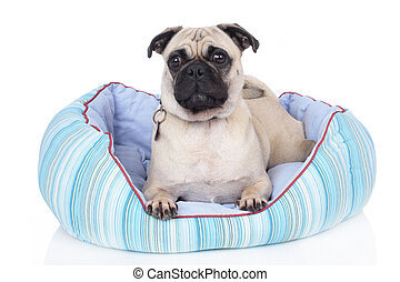Dog lying in dog bed