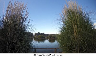 Reeds and Lake