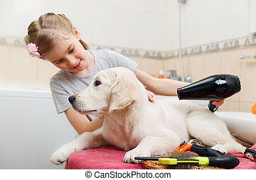 girl grooming of her s dog at home - Girl owner is grooming...